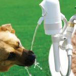 Automatic Dog Drinking Fountain 1
