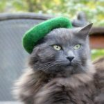 Hats For Cats 1