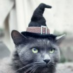 Hats For Cats 2