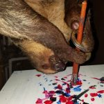 Paintings Made By Sloths