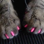 Soft Cat Claws