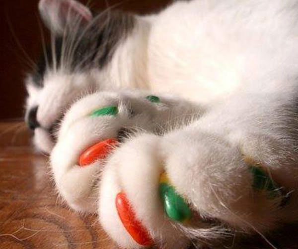 Soft Cat Claws 2