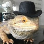 Top Hats For Small Pets 2