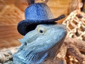 Top Hats For Small Pets